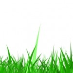 Grass Background (PSD, PNG)