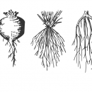 5 Plant Roots Vector (EPS, SVG, PNG)