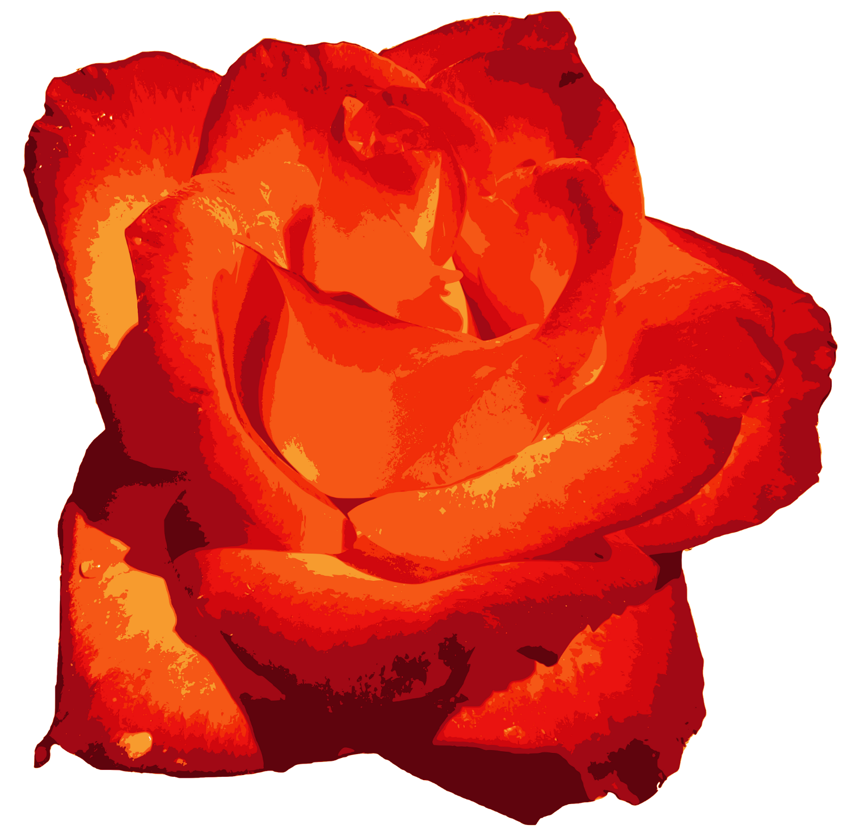 Red Rose PNG Image Transparent | OnlyGFX.com
