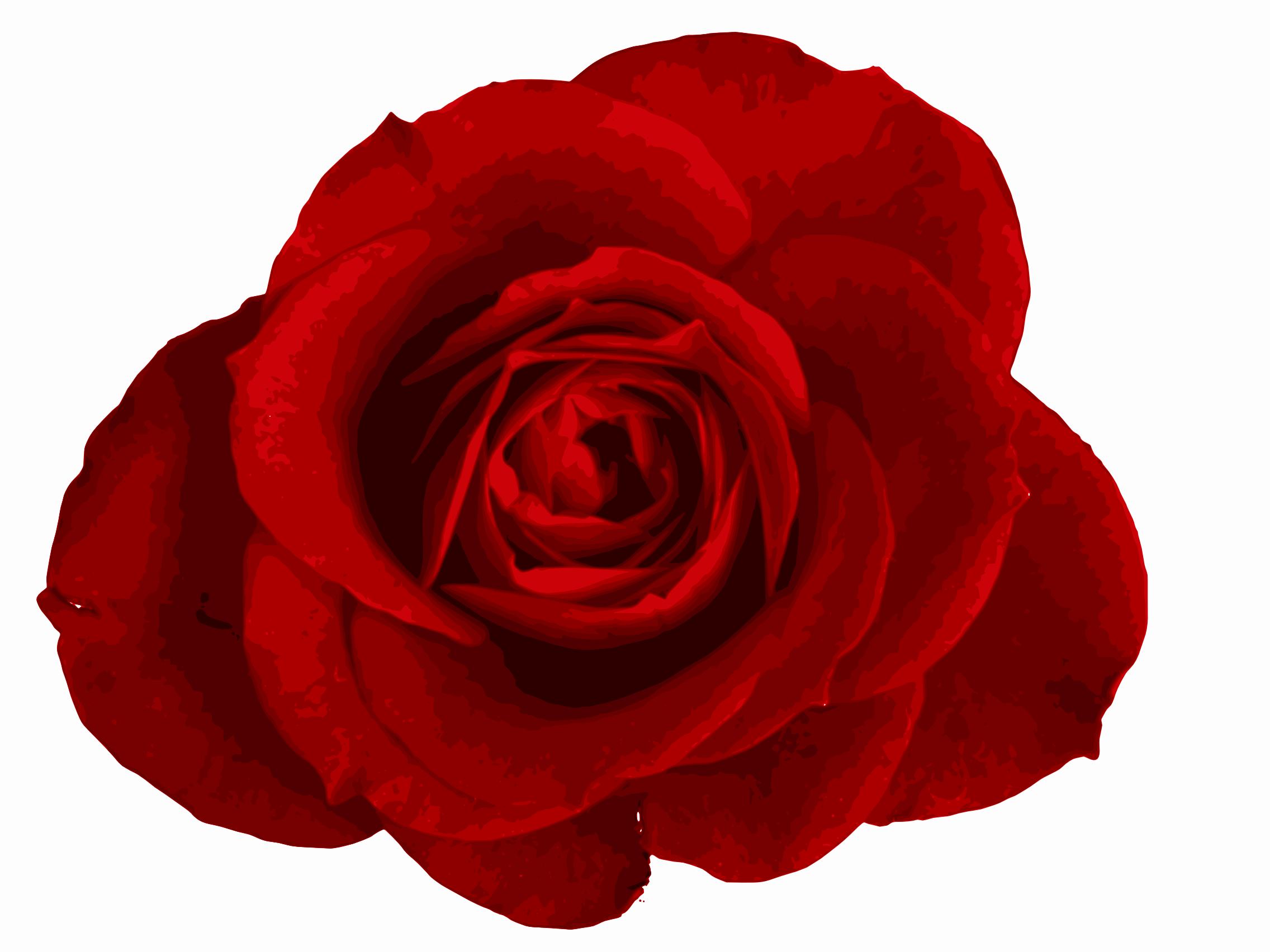 Red Rose Png Image Transparent Onlygfx Com