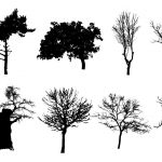 10 Tree Silhouettes (PNG Transparent Background)
