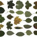 25 Leaves (PNG Transparent)