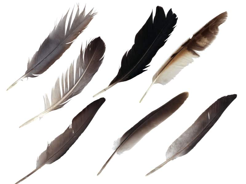 7 Feathers