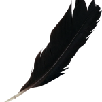 7 Feathers (PNG Transparent)