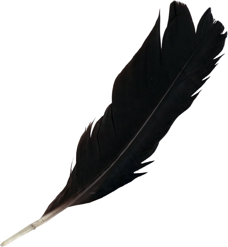 feather-4