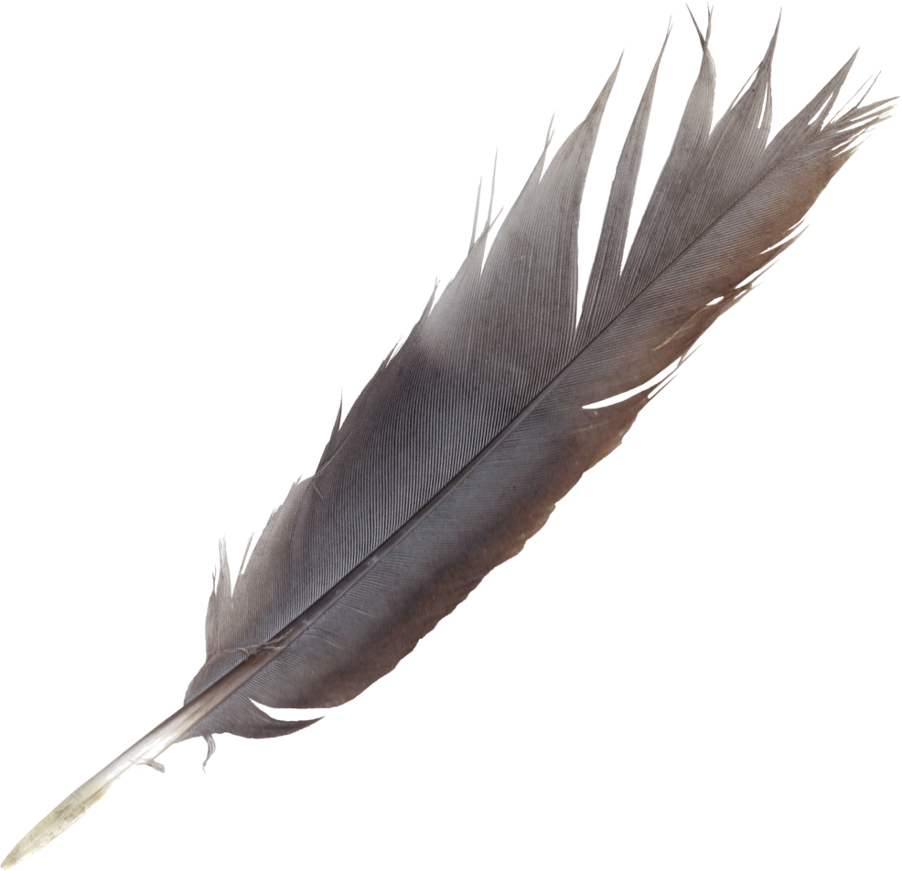 feather-6