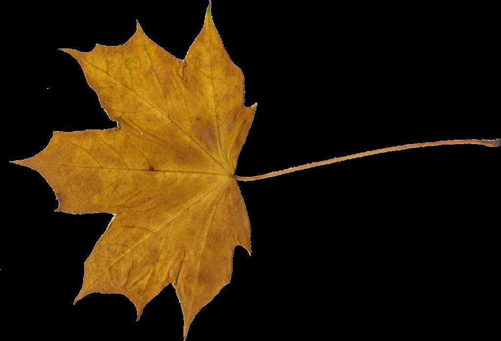 maple-leaf-2