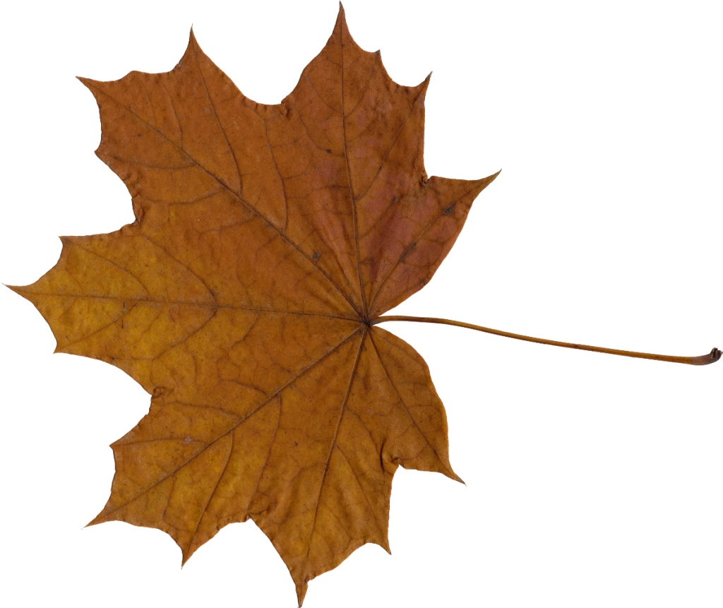 maple-leaf-5