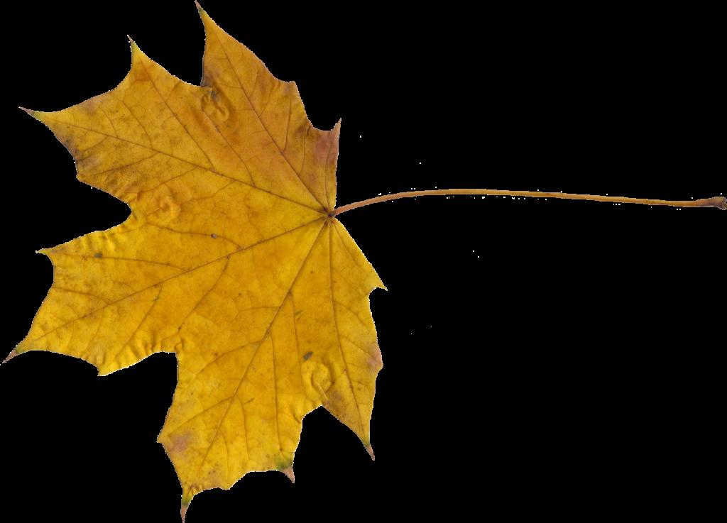 maple-leaf-9