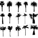 15 Palm Tree Silhouettes PNG Transparent Background