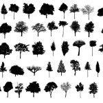 45 Tree Silhouettes PNG Transparent Background