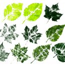 10 Printed Leaf Texture (PNG Transparent)