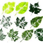 10 Printed Leaf Texture (PNG Transparent)