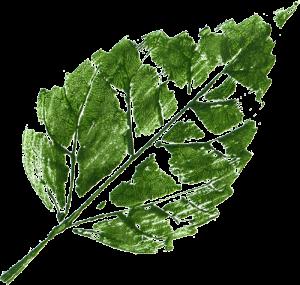 10 Printed Leaf Texture (PNG Transparent) | OnlyGFX com