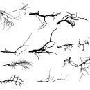 15 Simple Tree Branch Silhouettes (PNG Transparent)