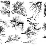 15 Tree Branch Silhouettes (PNG Transparent)