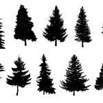 10 Pine Tree Silhouette (PNG Transparent)