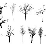 12 Simple Bare Tree Silhouettes (PNG Transparent)