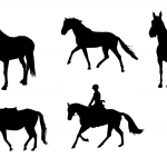 5 Horse Silhouette (PNG Transparent)