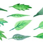 10 Watercolor Leaf (PNG Transparent)