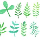 12 Watercolor Leaf (PNG Transparent) Vol. 2