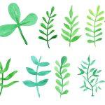 12 Watercolor Leaf (PNG Transparent) Vol. 2
