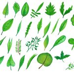 30 Watercolor Leaf (PNG Transparent) Vol. 4