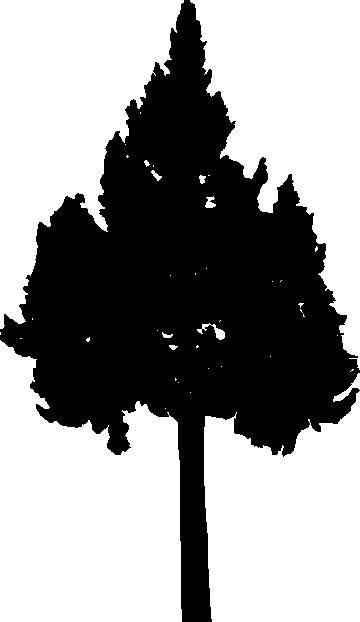 30 Pine Tree Silhouette (PNG Transparent) Vol. 2 | OnlyGFX.com