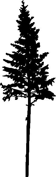30 pine tree silhouette  png transparent  vol  2