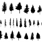 30 Pine Tree Silhouette (PNG Transparent) Vol. 2