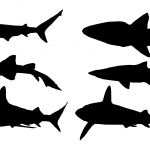 6 Shark Silhouette (PNG Transparent)