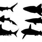 6 Shark Silhouette (PNG Transparent)