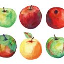 6 Watercolor Apple (PNG Transparent)