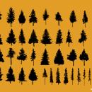 40 Pine Tree Vector (SVG)