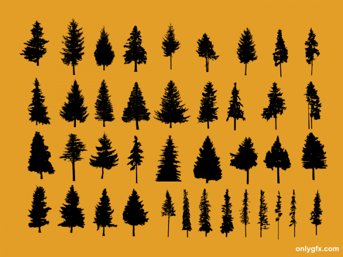 40-pine-tree.png