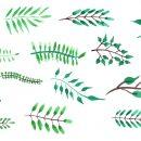 14 Watercolor Leaf (PNG Transparent) Vol. 5