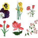 10 Paint Flower (PNG Transparent)