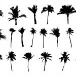 20 Palm Tree Silhouette (PNG Transparent) Vol. 2