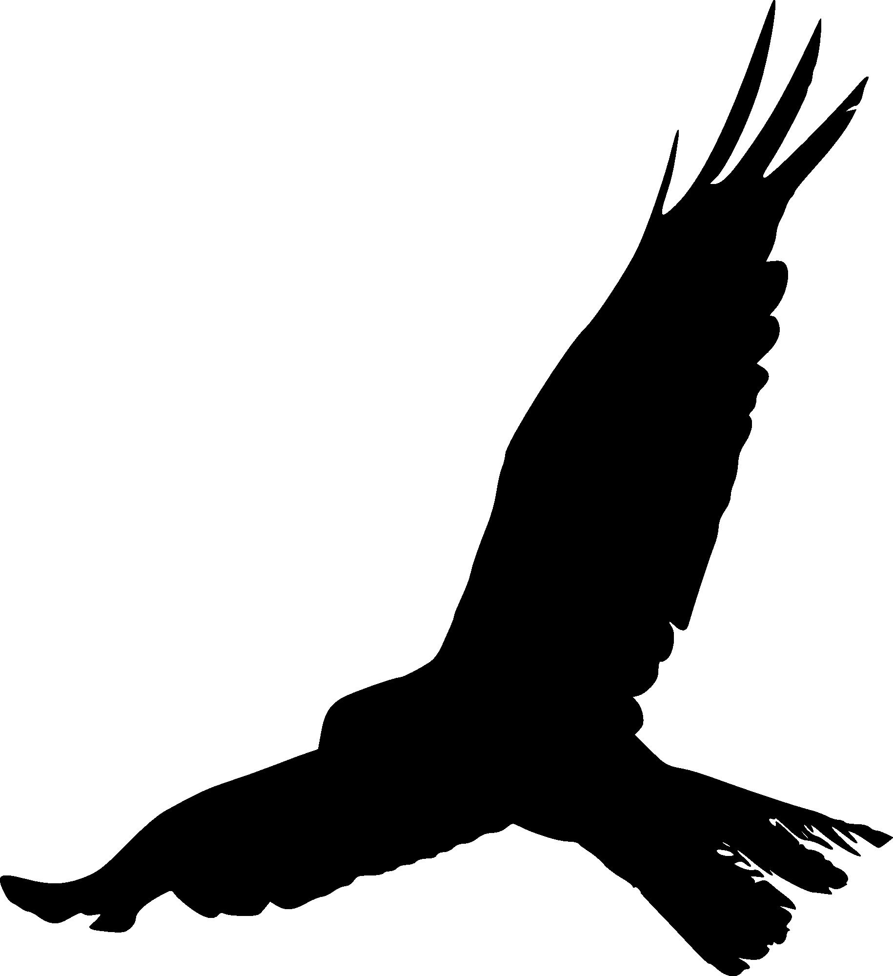 15 Bird Silhouette (PNG Transparent) | OnlyGFX.com