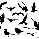 15 Bird Silhouette (PNG Transparent)