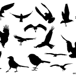 15 Bird Silhouette (PNG Transparent)
