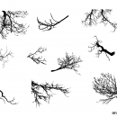 10 Tree Branches Silhouette (PNG Transparent) Vol. 2