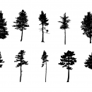 10 Pine Tree Silhouette (PNG Transparent) Vol. 3
