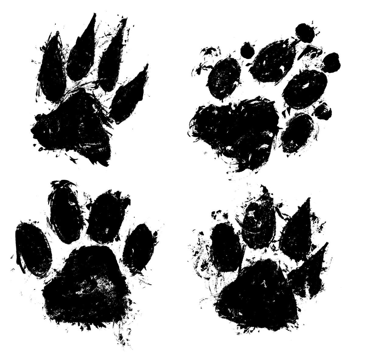 4 Grunge Paw Print Png Transparent Onlygfx Com Paw print color painting by dan sproul. 4 grunge paw print png transparent