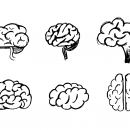6 Brain Drawing (PNG Transparent)