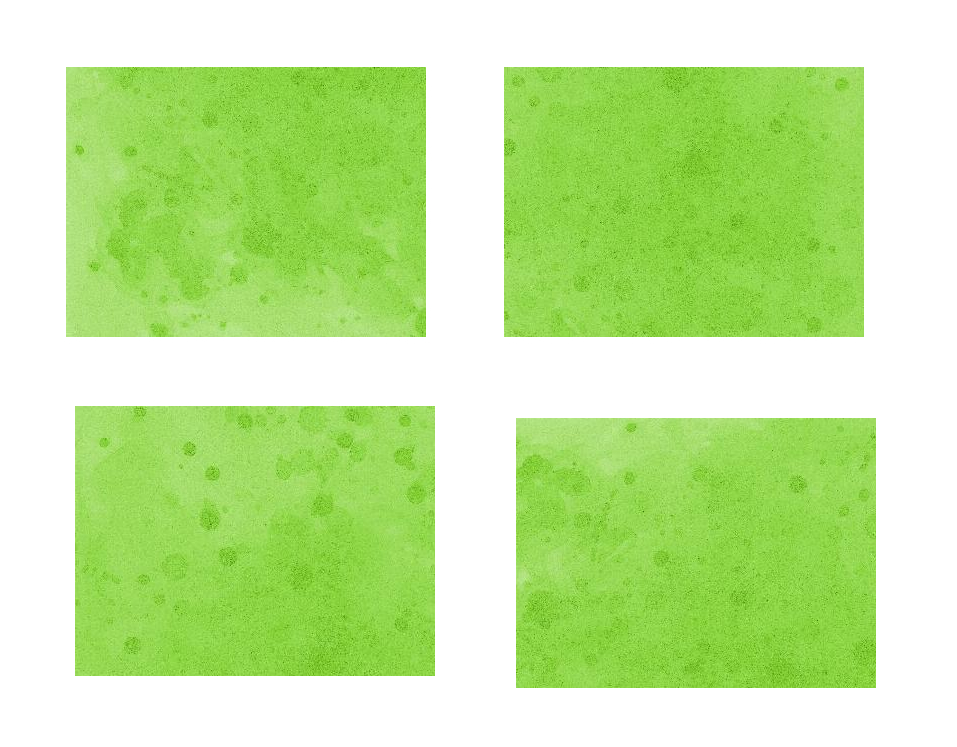 4-light-green-watercolor-background-cover.jpg