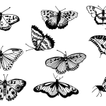 10 Butterfly Drawing (PNG Transparent)