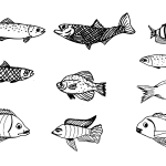 10 Fish Drawing (PNG Transparent)