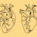 2 Real Heart Drawing (PNG Transparent)