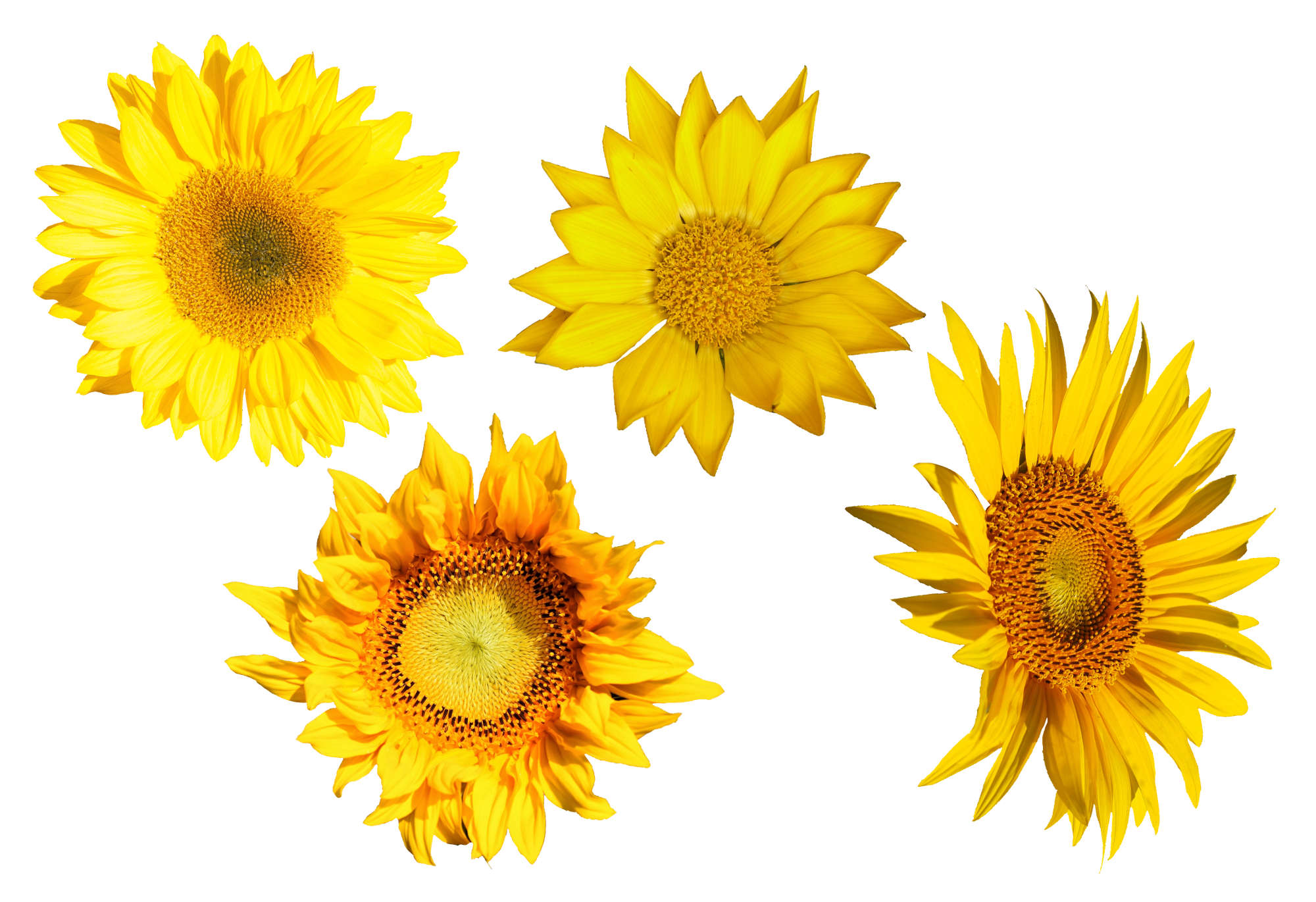4-sunflower-cover.jpg